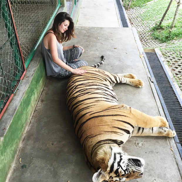 Tiger-Kingdom-Phuket