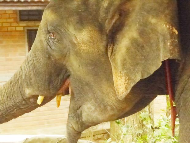 Kok-Chang-Elephant-trekking-Phuket